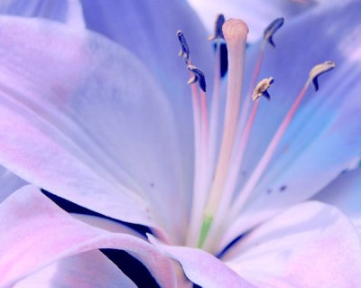 fleur_de_lis_by_echorukia